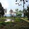 Jardines Undurraga Ahm