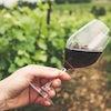Degustacion Vinos Chianti