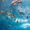 Especies Oceanario