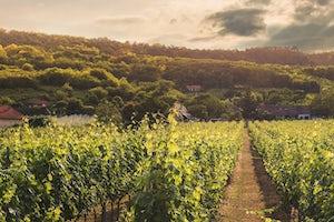 Excursión A La Toscana Degustación De Vinos